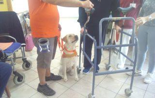 Gruppo Villa Argento residenze sanitarie pet therapy